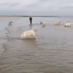Dog Hops into Ocean on @gfycat