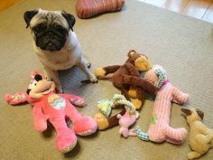 A pug & his friends.