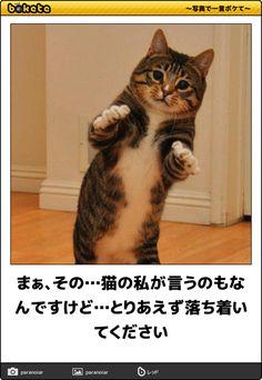 まぁ、その…猫の私が言うのもなんですけど…とりあえず落ち着いてください