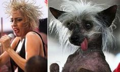Some Dogs Looks Like Celebrities - 9 photos - Morably