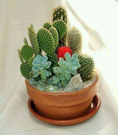 Send the Cactus Garden bouquet of flowers from The Flower Cart in Scottsdale, AZ. Local fresh flower delivery directly from the florist and never in a box! Cacti And Succulents, Planting Succulents, Cactus Plants, Planting Flowers, Indoor Cactus, Flowers Garden, Mini Cactus Garden, Cactus Flower, Flower Bookey