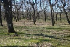 http://misierradegata.com/ruta-4x4-y-senderismo-al-dolmen-del-maton-caceres/ Rutas 4x4 Caceres