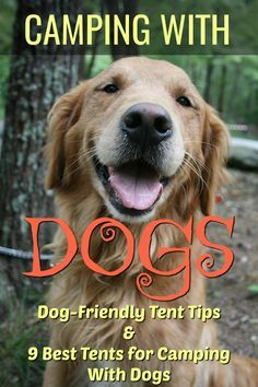 Camping with dogs tips and tricks  The best tents for camping with a