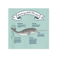 Information graphics about the mysterious narwhal.