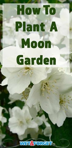 Discover which plants are best for a moon garden and how to pick out the best design for your backyard with our guide!