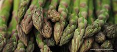 Treat yourself to a new asparagus Asparagus planting Asparagus site and Asparagus Asparagus Asparagus supports Treat yourself to a new asparagus bed! An asparagus bed is one of life's luxuries;