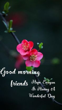 Good Morning Monday Images, Good Morning Happy Saturday, Good Morning Beautiful Pictures, Good Morning God Quotes, Good Morning Picture, Good Morning Friends, Good Morning Greetings, Morning Pictures, Sunday Pictures