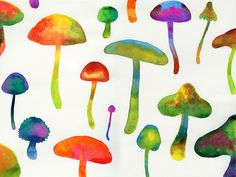 Psychadelic Mushrooms ,
