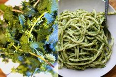 """Stinging nettles seem to be having their time in the sun, as it were. In years past, we've spotted one recipe, maybe two, mostly begging people to """"pretty please, just give nettles a chance!"""" This year, recipes like the ones below are popping up all over the place with enthusiastic reviews! Have you tried stinging nettles yet?"""