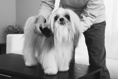 Pet advice: Pamper your dog (and protect his health) with good grooming  http://www.gastongazette.com/lifestyles/community-spotlight/pet-advice-pamper-your-dog-and-protect-his-health-with-good-grooming-1.350473