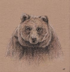 Brown Bear, Illustration, Animals, Collection, Animales, Animaux, Illustrations, Animal Memes, Animal