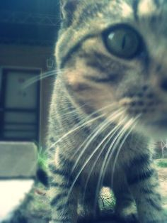 Gatito...