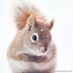 """Fine Art Squirrel Photo Print """"Little Red Squirrel"""""""