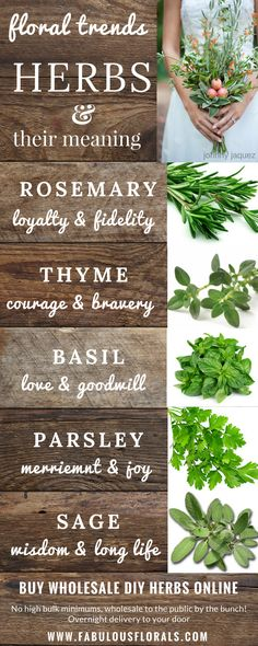 Herbs & their meanings. The source for wholesale DIY wedding flowers! Herbs & their meanings. The source for wholesale DIY wedding flowers! Diy Wedding Flowers, Diy Flowers, Colorful Flowers, Floral Wedding, Wedding Bouquets, Beautiful Flowers, Wedding Ideas, Greenery For Wedding, Herb Wedding Centerpieces