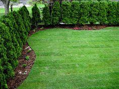 test   zakładanie ogrodów