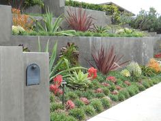 Clean, minimalist lines with bold forms. Less is more with modern gardens. Especially well suited to tropicals and succulents.