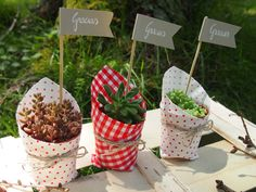 succulent flags - have different messages for gift giving Suculentas Diy, Cactus Y Suculentas, Succulent Arrangements, Cacti And Succulents, Succulent Favors, Small Gifts, Indoor Plants, Potted Plants, Diy And Crafts