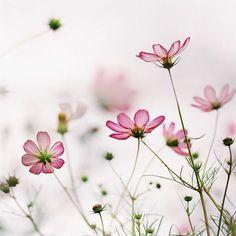 Imagem de flowers and pink