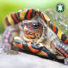 Come over to wildawear.com and see all the animal inspired product we have for you. 'You Shop & We Adopt' Your purchase helps us adopt and sponsor lots of animals! Plus if you use Code 'PINTURTLE' at Checkout to get 10% OFF!