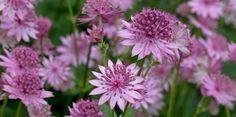15 of the best shade-loving garden plants