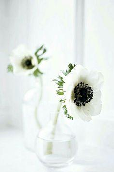 White Anemone, Anemone Flower, White Tulips, White Roses, Flower Vases, Flower Arrangements, Buddha Flower, Pepper Tree, Beautiful Interior Design