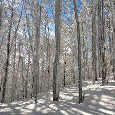 Il bosco delle favole. Parco delle Foreste Casentinesi - Instagram by pipienriccia