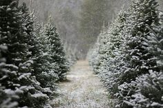 Facebook cover picture/photo. --- Christmas tree farm with snow.
