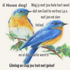 Goeie More, Morning Wish, Afrikaanse Quotes, Balloon, Fancy, Animals, Diy, Inspiration, Frases