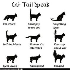 The tail of your cat can speak volumes. Check out this little  #cheatsheet, plus many more helpful tips, on our #pinterest. Hope you enjoy the rest of your #Caturday. #cattails #countrysidevet