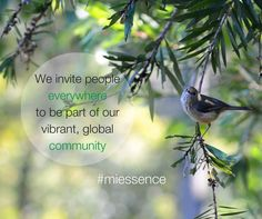 The Miessence community is a vibrant group of like-minded people who have a passion for certified organic products for their health, beauty and home.  We hope you'll join us!