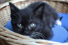 black kitten by carolien 4, via Flickr