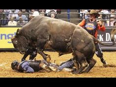 Extreme Bull Riding and Bull Fighting Fail Compilation