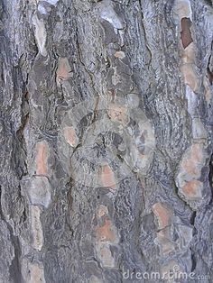 Gray Tree Bark Pattern Background  © Morgan Capasso