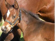 Pleasure Horse - Passion, Business, Community since 1998