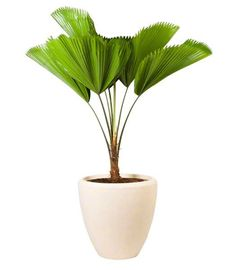 I need this too because i don't have enough huge leaves smacking my face every time I turn around yet.only half the time.