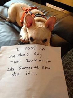 Dog shaming, pet shaming, pet shame, pets ...For more humor dogs and hilarious animals visit www.bestfunnyjokes4u.com/lol-funny-cat-pic/