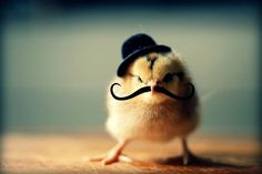 chicks-in-hats-12.jpg