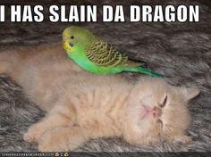 cats#kittens#animals#funny