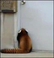 【GIF画像】イッヌ「エレベーター降りるンゴ」テクテク