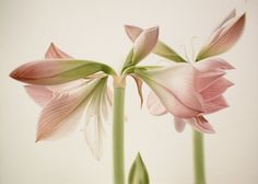 Ohio artist David Herzig - #flowers