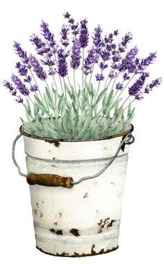 News - flowers - paint Watercolor Print, Watercolour Painting, Watercolor Flowers, Art Floral, Fleurs Diy, Plant Painting, Decoupage Vintage, Plant Illustration, Botanical Art