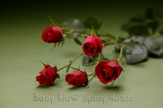 Baby Rio® SCARLETT MINI Spray Rose