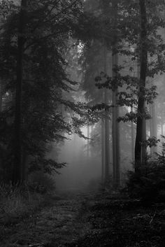 A beautiful foggy forest Landscape Photography Tips, Nature Photography, Photography Tricks, Night Photography, Digital Photography, Scenic Photography, Aerial Photography, Photography Women, Paradis Sombre