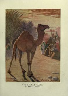 2 - The wild beasts of the world / - Biodiversity Heritage Library