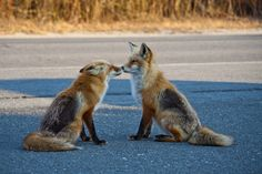 Red Foxes by Edward Hewitt on 500px