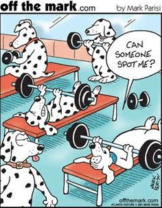 """""""Can someone spot me...?"""" LOL. #Weight_lifting #Workout #Bench_press #Gym #Dog #Dalmation #Cartoon #Comic #Funny"""