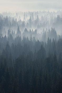 #лес #туман