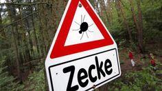 #Zecken: Landesgesundheitsamt rät zu Impfung gegen FSME - t-online.de: t-online.de Zecken: Landesgesundheitsamt rät zu Impfung gegen FSME…