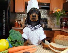 Chef Costume for Dachshunds