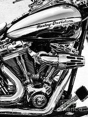 Harley Davidson Framed Prints - Harley Monochrome Framed Print by Tim Gainey